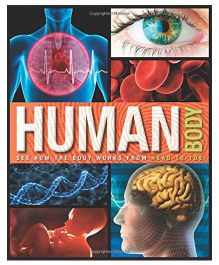 Human Body See How the Body Works from Head to Toe - English