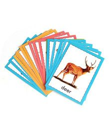Creative Discover Animals Flash Cards - 36 Cards