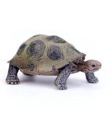 tortoise online india