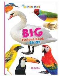 Big Picture Book Of Birds - English