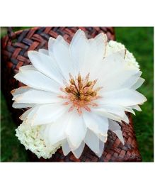 Akinos Kids Glitter Flower Stamens Crochet Headband - White