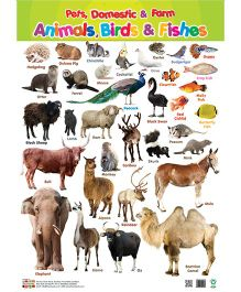Animals Birds And Fishes Chart - English