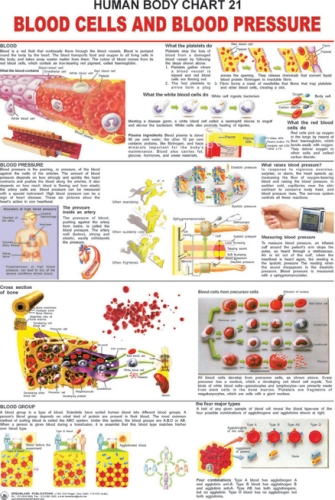 Blood Cells And Blood Pressure