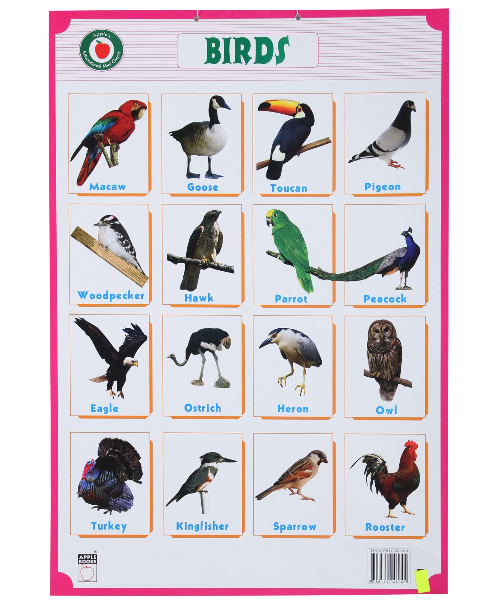 Pictures of Indian Birds Chart - #rock-cafe