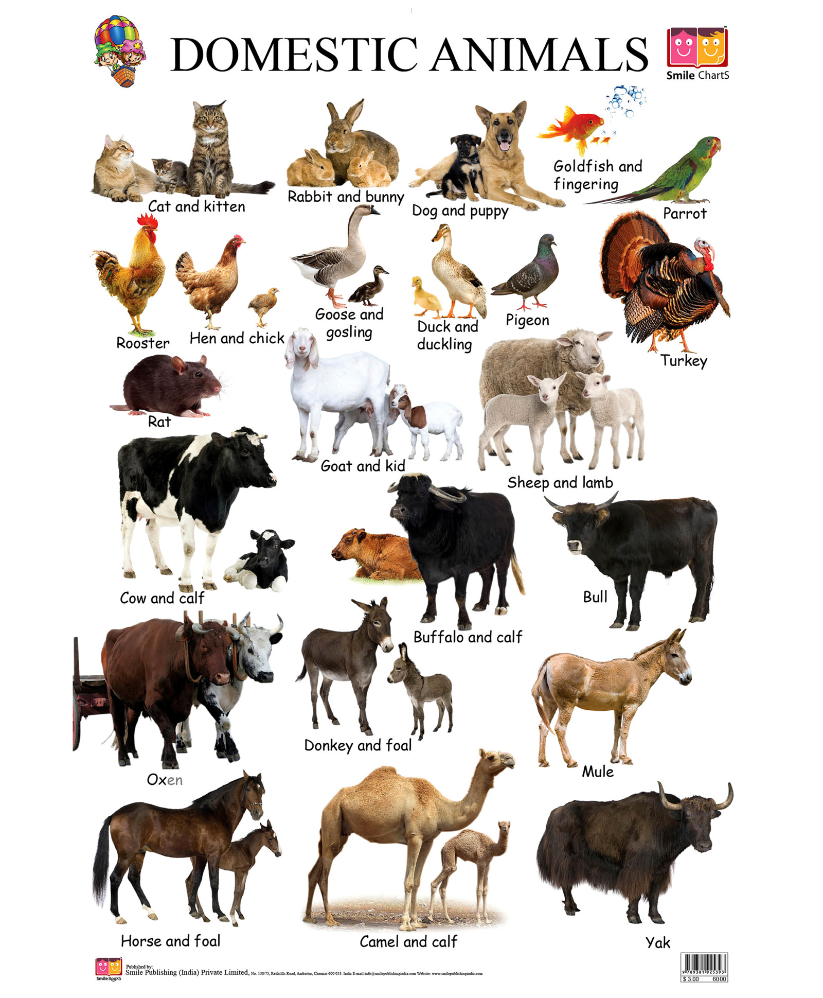 from wild animals to domestic pets Wild animals as pets wild animals do not make good pets what animals do make good pets a pet is a domesticated animal that is kept for pleasure rather than utility domesticated animals make good pets because they have been bred.