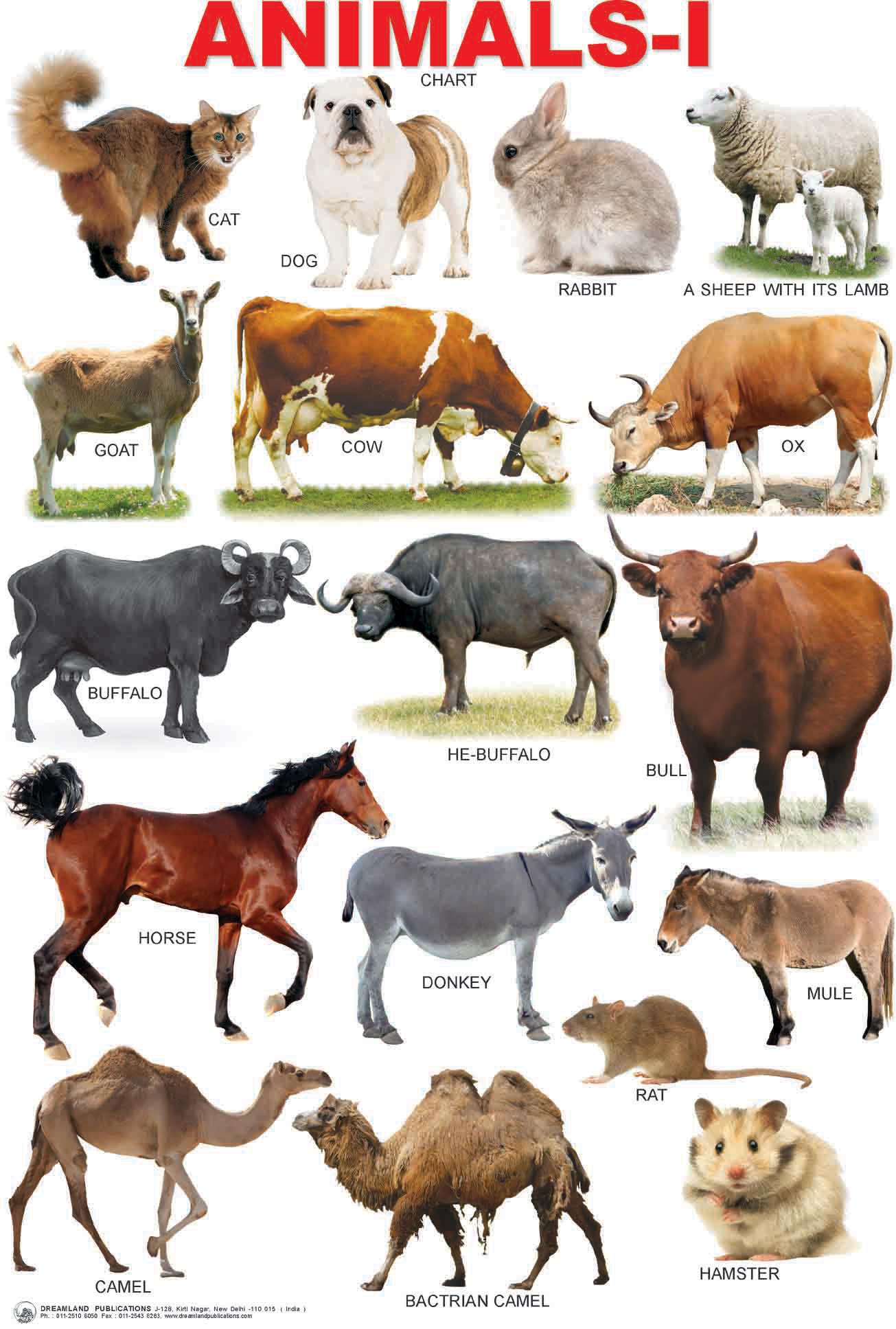 Pics For > Farm Animals Chart