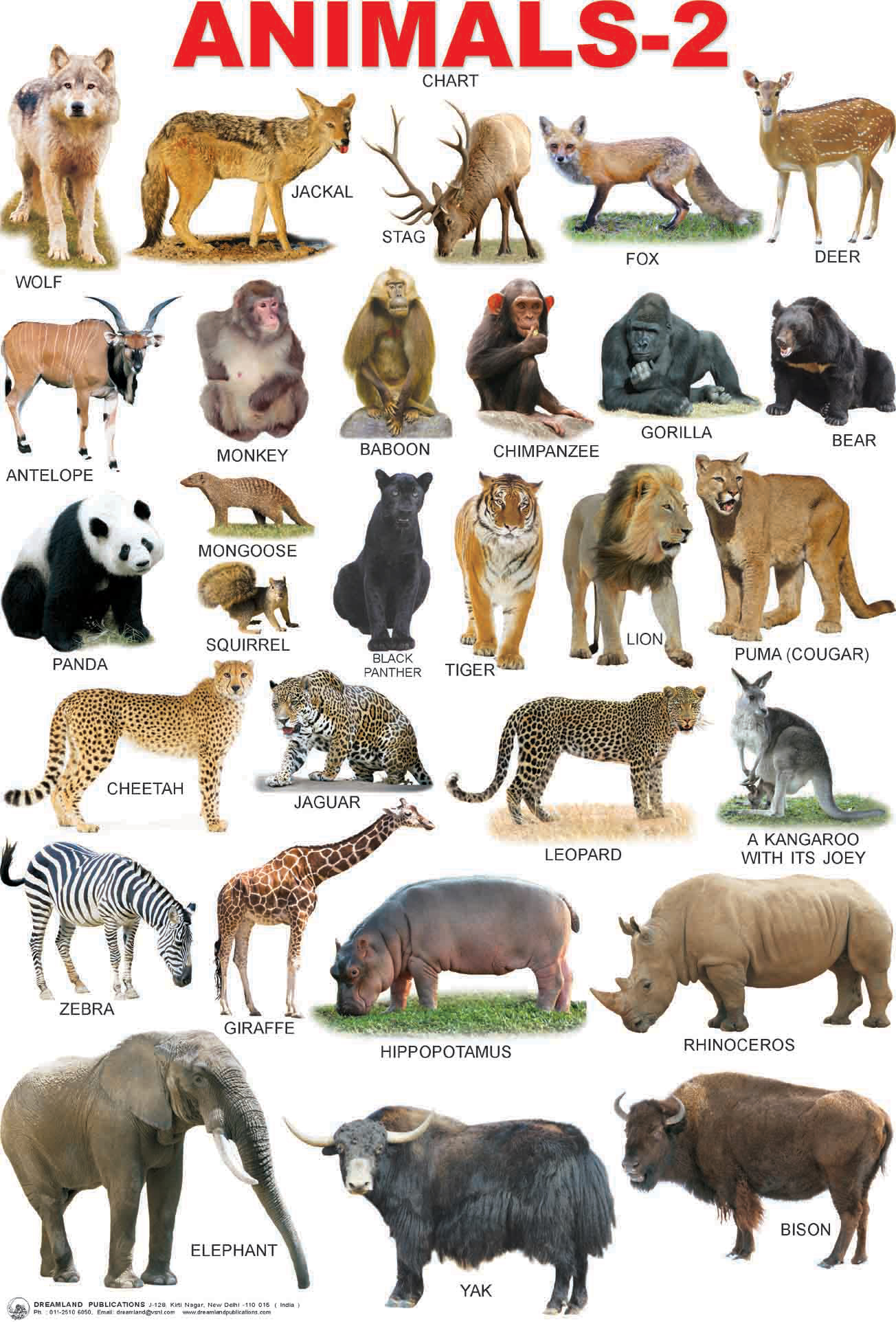 Different types of animals names with pictures