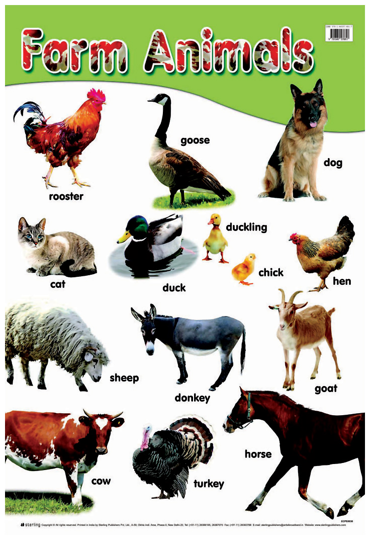 animal farm book report characters Read this literature book/movie report and over 87,000 other research documents animal farm book report animal farm for my book report, i chose the classical short.